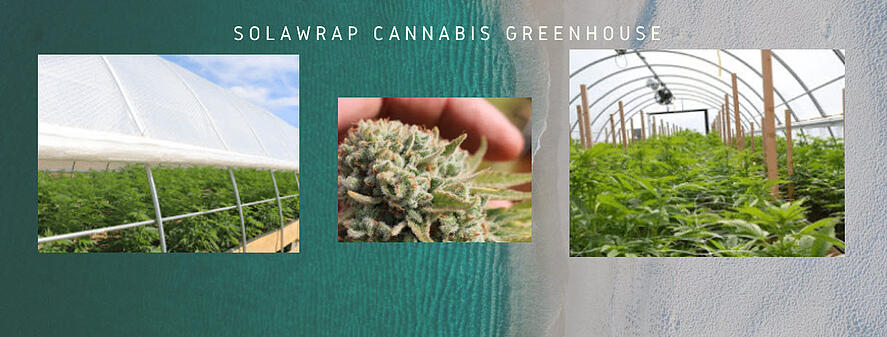 Cannabis greenhouse solawrap 2