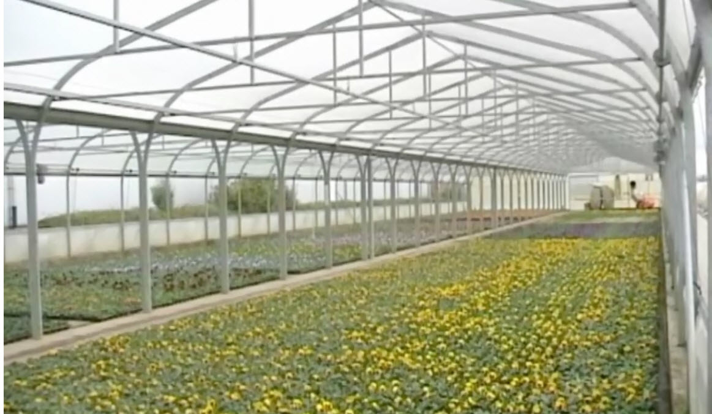 Greenhouse Plastic Cover SolaWrap