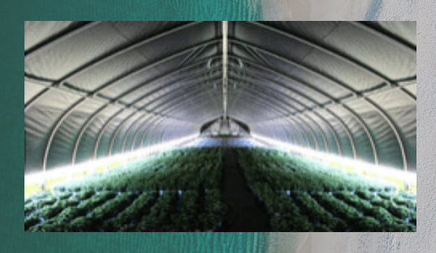 Light Dep Greenhouse by SolaWrap Greenhouses